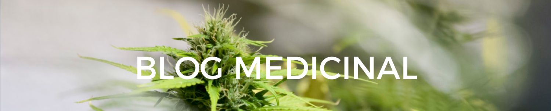 Receta Cannabis