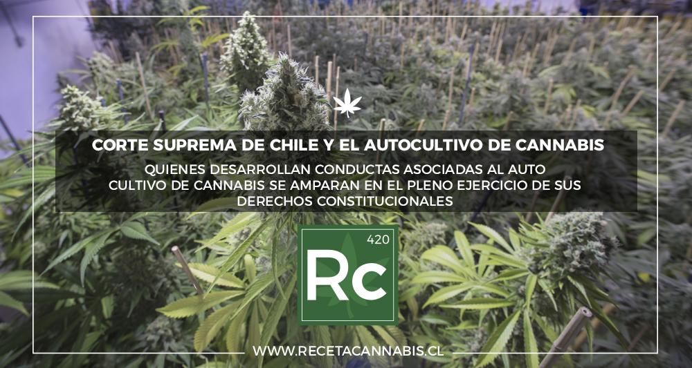 cortesupremachile_cannabis