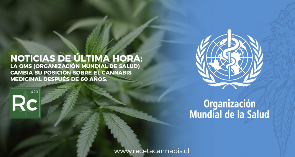noticia_oms_cannabis_medicial