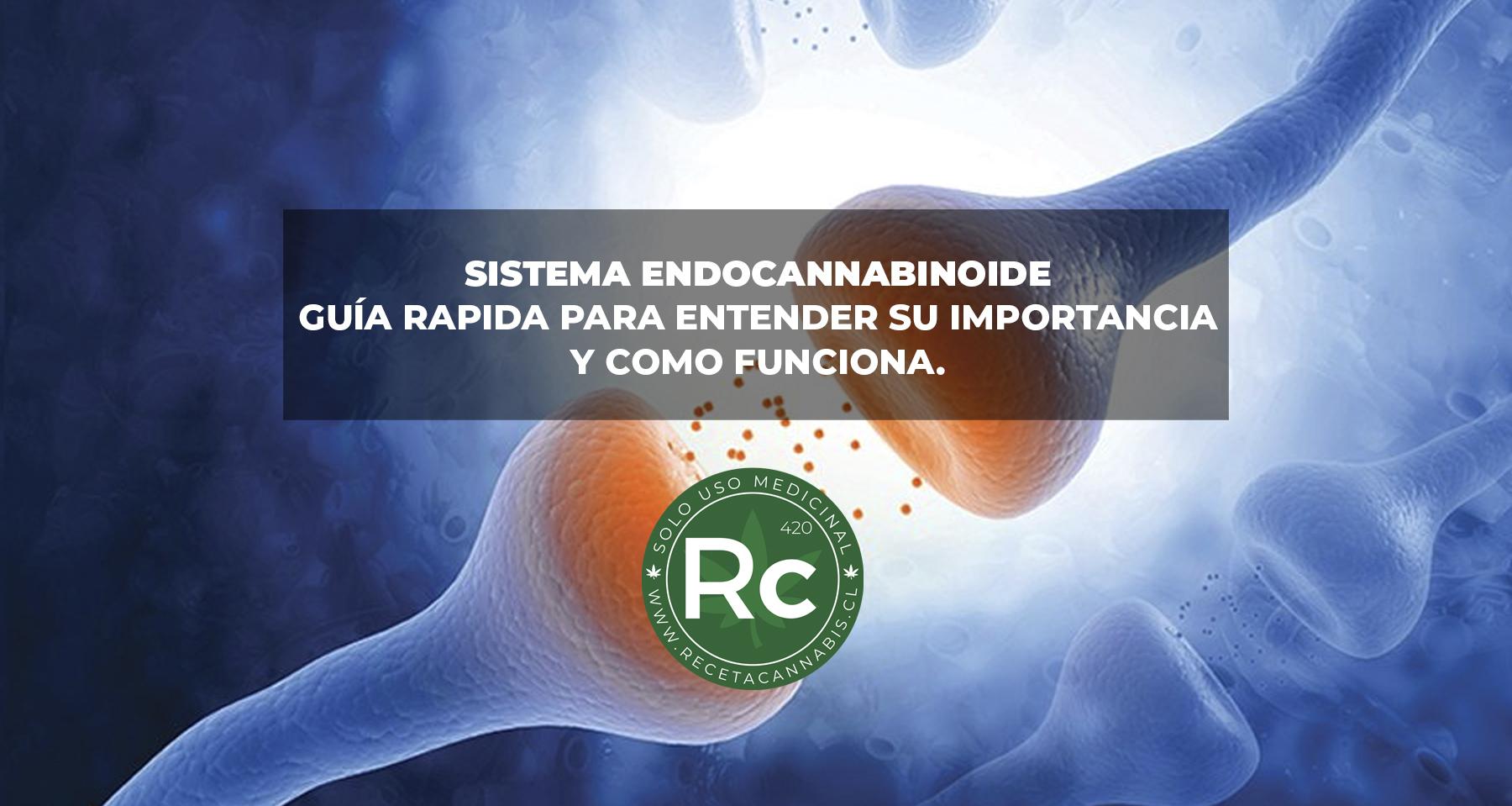 sistema_endocannabinoide_guia