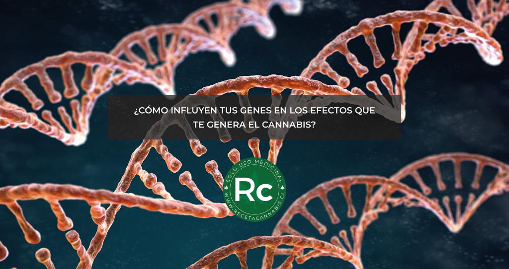 diferentes efectos del Cannabis por cambios genéticos